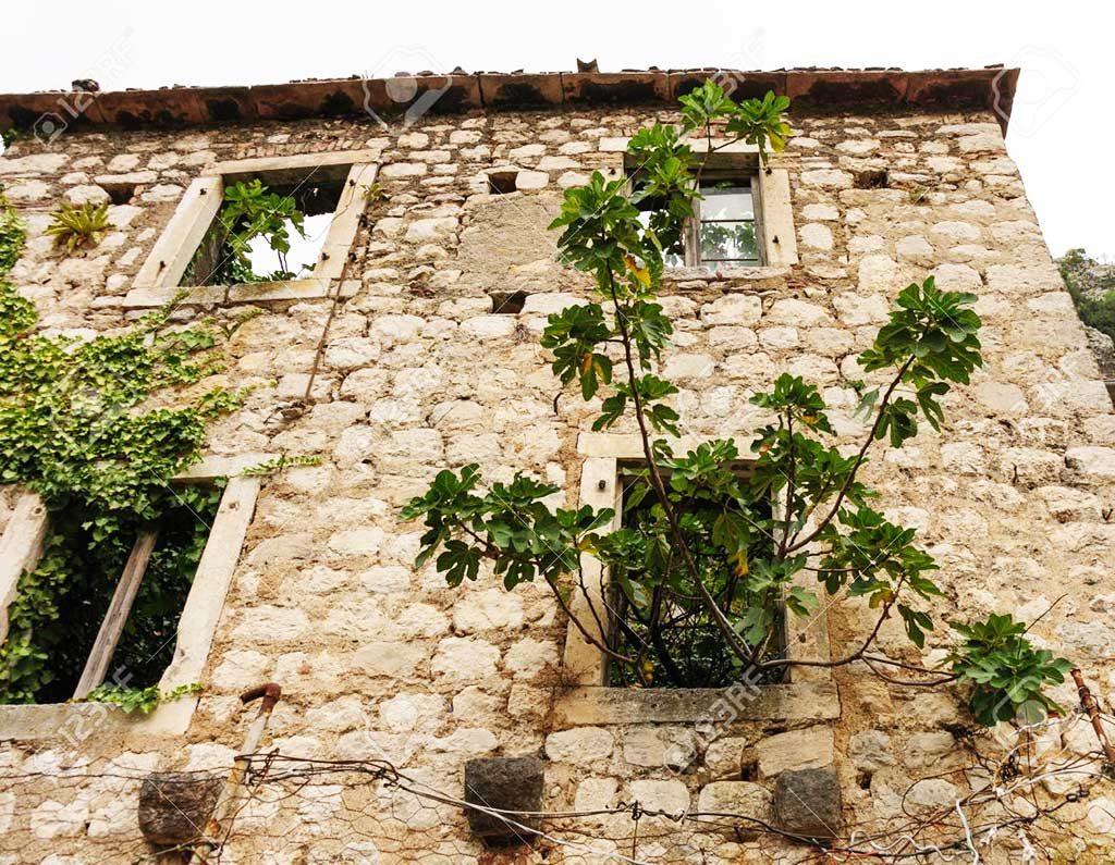 casa diroccata con alberi di fichi