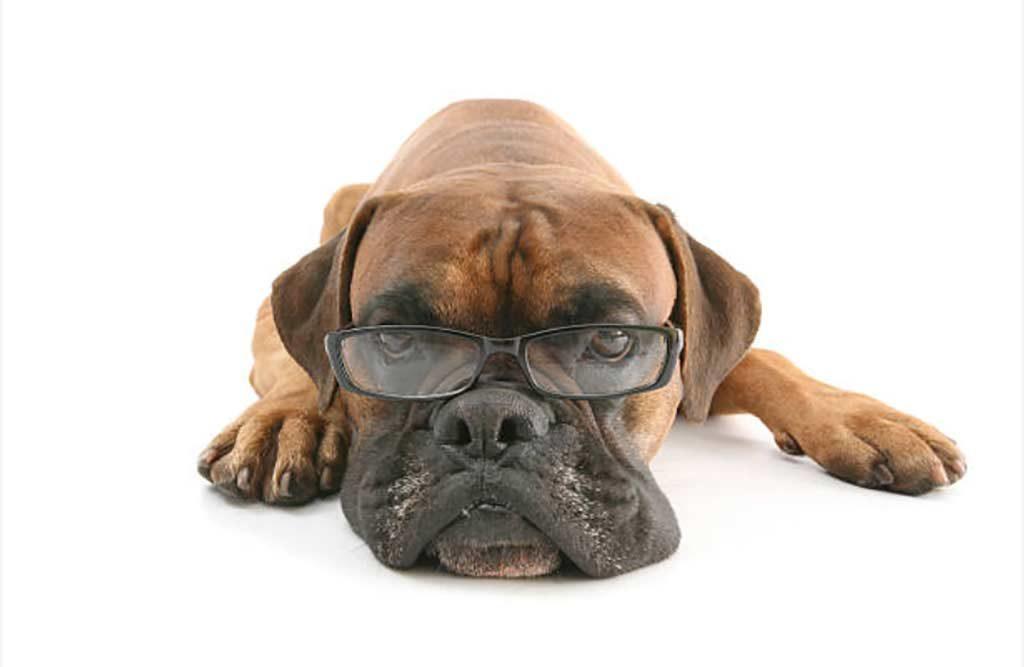 boxer con occhiali